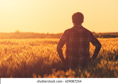 Farmer in ripe wheat field planning harvest activity, female agronomist looking at sunset on the horizon