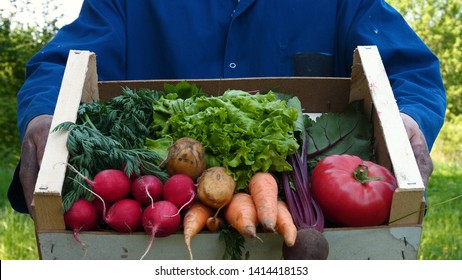 Farmer selling his organic produce on a sunny day. Farmer giving box of veg to customer on a sunny day. Man buying vegetables at farmers market from a handsome farmer. Concept of: Bio organic, Slow mo