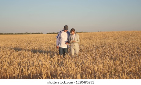 farmer sells wheat grain to business woman. business woman with tablet and farmer teamwork in a wheat field. Business woman and agronomist checks the quality of grain in field. Harvesting cereals.