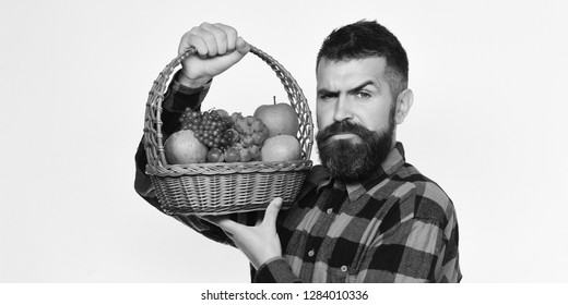 Farmer with serious face presents apples, grapes and cranberries. Man with beard holds basket with fruit isolated on white background. Farming and gardening concept. Guy holds homegrown harvest