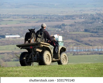 Farmer with sheep on quad bike in rural East Sussex, England