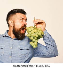 Farmer shows his harvest. Man with beard holds bunch of green grapes isolated on white background. Viticulture and gardening concept. Winegrower with shocked face holds cluster of grapes