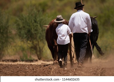 Farmer and son and buffalo plowing farmer field,guided by an elderly farmer while ploughing a field