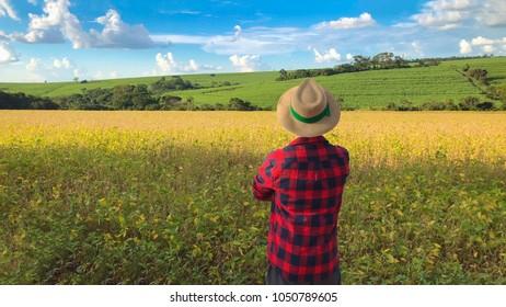 Farmer in soybean field plantation