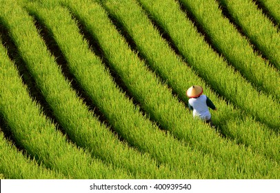 Farmer sprayed pesticides on a field of shallot plantation. Terracing in West Java, Indonesia