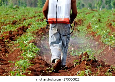 farmer spraying pesticide in the cassava field