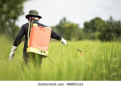 Farmer spraying pesticide during sunset time