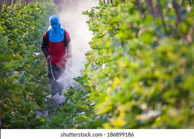 farmer spraying pesticide in farmland