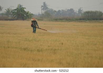 A farmer spraying pesticide on a rice field in Malaysia