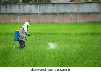 Farmer spraying pesticide to rice by insecticide sprayer with a proper protection in the paddy field.