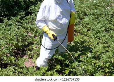 Farmer spraying pesticide in vegetable garden