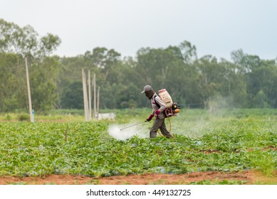 A farmer is spraying pesticides in his vegetable plantation. This is the situation of agriculture in Southeast Asia today.