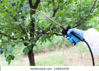 Farmer spraying toxic pesticides or insecticides in an orchard