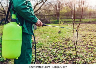 Farmer spraying tree with manual pesticide sprayer against insects in spring garden. Agriculture and gardening