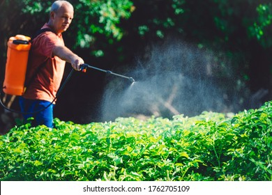 Landwirte, die Gemüse im Garten mit Herbiziden, Pestiziden oder Insektiziden besprühen.