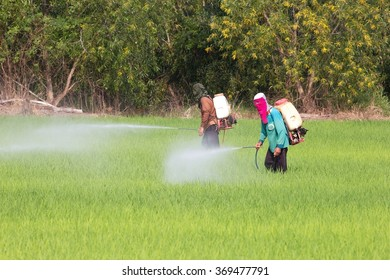 Farmer sprays fertilizer in the field