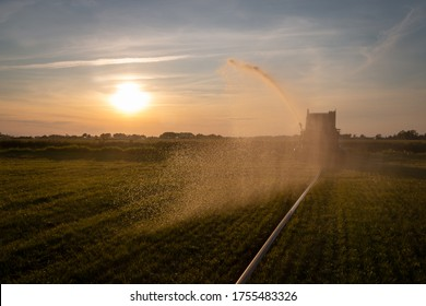 The farmer sprays the grass with water during times of drought in the Netherlands, Friesland province near the village of Harich