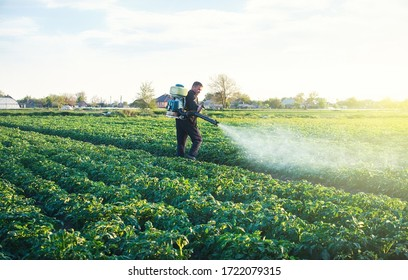 A farmer sprays a solution of copper sulfate on plants of potato bushes. Use chemicals in agriculture. Fight against fungal infections and insects. Agriculture and agribusiness, agricultural industry.