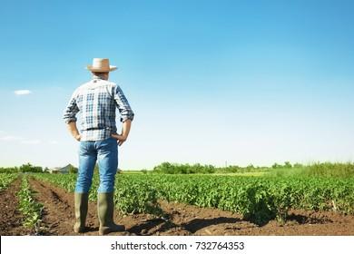 Farmer standing in field with green plants