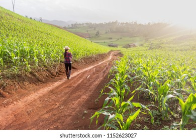 A farmer standing in his cornfield at sunset watching his crop