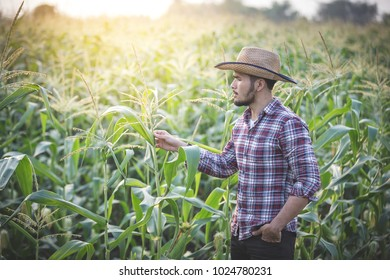 farmer standing proud in front of his corn field while sunny summer day