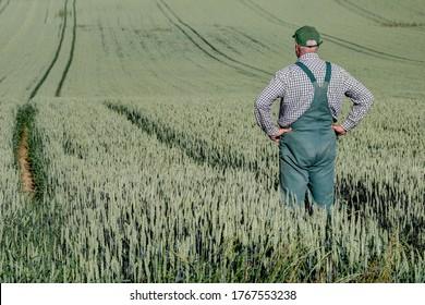 Un fermier se tient dans la ruelle de son tracteur et regarde par-dessus son grand champ de céréales. Sur le terrain, vous pouvez voir de nombreuses voies du tracteur. Vue de derrière.