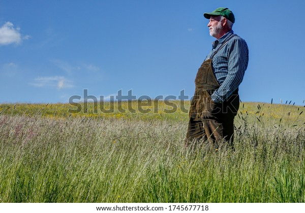 A farmer stands on his organic meadow, which he only mows twice a year. These meadows in their original condition offer a year-round habitat for endangered species.