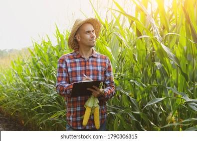 Un fermier en chapeau de paille avec un presse-papiers inspectant le maïs dans un champ quelque part en Ukraine