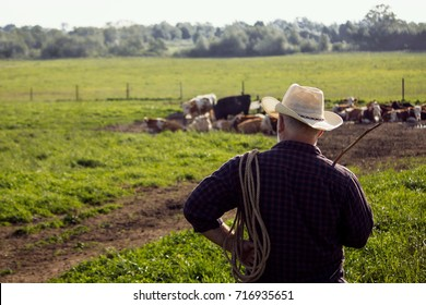 a farmer in a straw hat in a field with cows