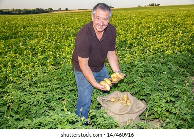 Farmer with the supervision of the potato field