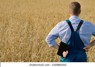 Farmer with tablet computer inspecting wheat field. Place for text