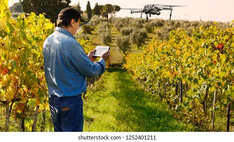 Farmer with tablet and drone inspecting vineyard in Chianti region, Tuscany, Italy