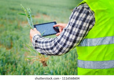 Farmer with tablet PC and cereals on field in rainy day