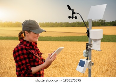 Farmer with tablet in a wheat field. Weather station in the field.