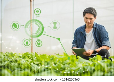 Farmer Tea Plantation checking quality by tablet agriculture modern technology Concept. Smart farming, using modern technologies in agriculture. Man agronomist farmer with digital tablet.