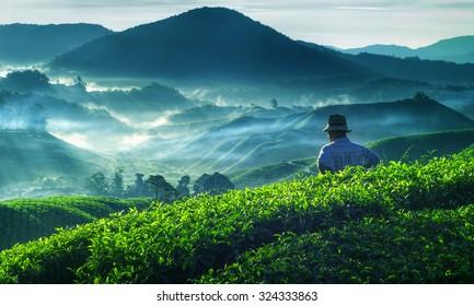 Farmer Tea Plantation Malaysia Culture Occupation Concept