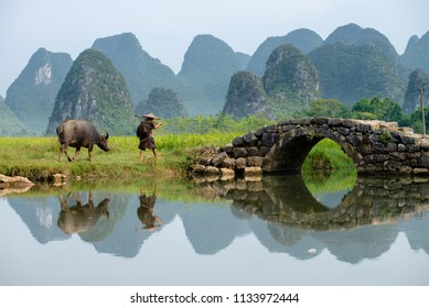 Farmer tends his buffalo in a paddy field of Huixiang, Guilin, China, a small town with karst and limestone landscape