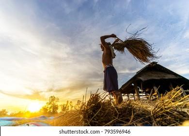 farmer threshing rice,Farmer manual harvest rice,countryside,Vietnam,