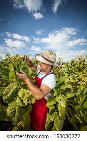 farmer tobacco