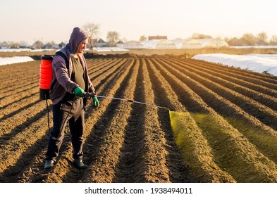The farmer treats the field from weeds and grass for growing potatoes. Use chemicals in agriculture. Harvest processing. Agriculture and agribusiness. Protection and care. Growing vegetables