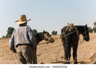 farmer and two horses