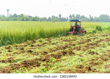 Farmer use Tractor Incorporation the Green manure