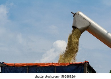 Farmer uses machine to harvest rice on paddy field in Sabak Bernam. Sabak Bernam is one of the major rice supplier in Malaysia.