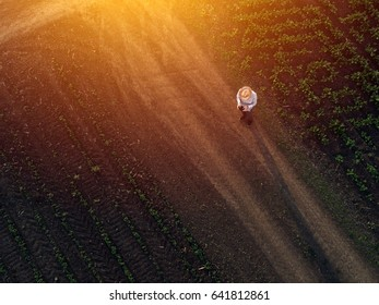 Farmer using drone in sugar beet crop field, concept of modern smart farming by using electronics, technology and mobile apps in agricultural production