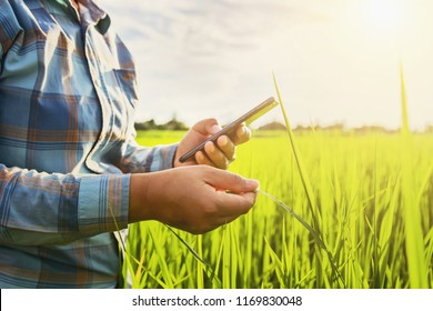 farmer using mobile checking report of agriculture in farm