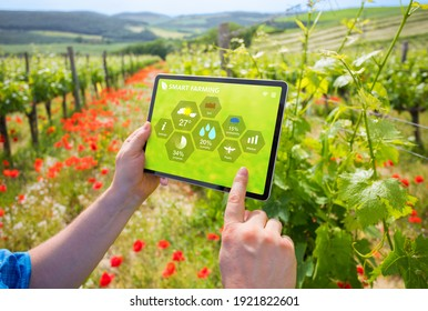 Bauern, die auf einem Weinberg intelligente Landwirtschaftstechnologien einsetzen.