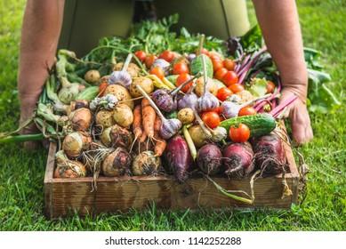 Farmer with a vegetable box, freshly harvested produce in the garden - farm fresh vegetables, organic farming concept