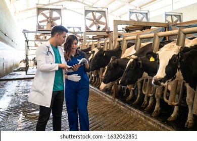 Farmer And Vet Inspecting Dairy Cattle Being Milked