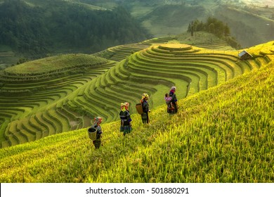 Farmer walking home in smooth symbolize the city's Mu cang chai,Yenbai,Vietnam.