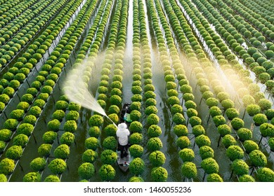 A farmer watering his flowers in the Mekong Delta, Vietnam
